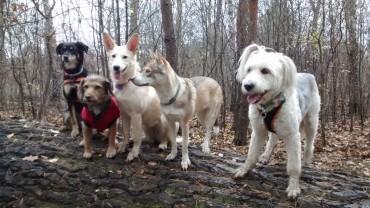 psia ekipa na spcaerze